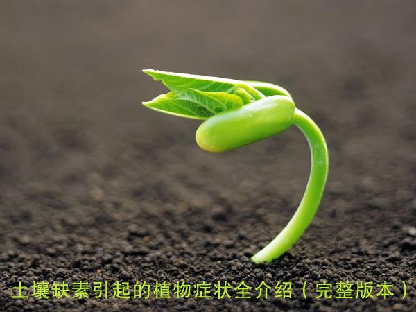 土壤缺素引起的植物症状全介绍(完整版本)
